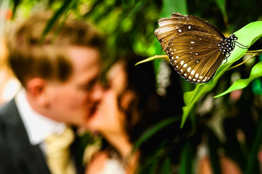 Bristol Zoo Wedding Photographer Butterfly House Wedding Portrait