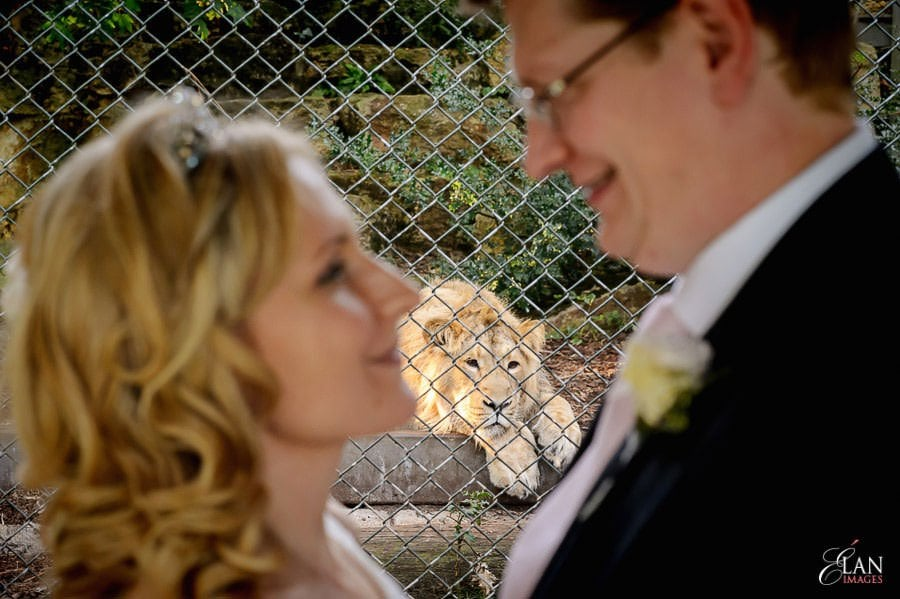 Autumn Wedding at Bristol Zoo 178