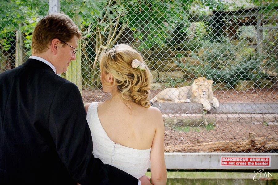 Autumn Wedding at Bristol Zoo 179