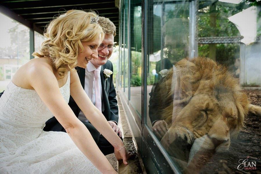 Autumn Wedding at Bristol Zoo 182