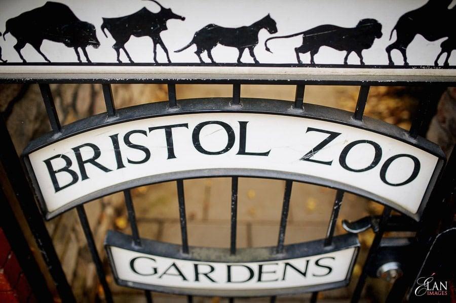 Autumn Wedding at Bristol Zoo 195