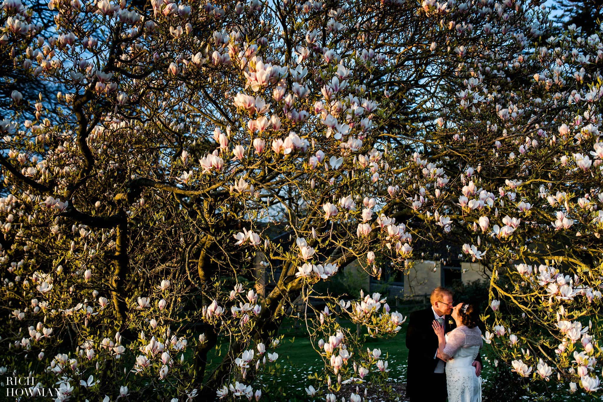 Wedding Photography under a magnolia tree