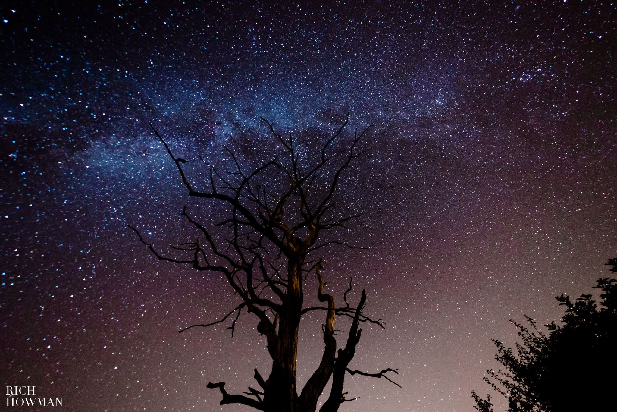 photo of the milky way with tree in foreground