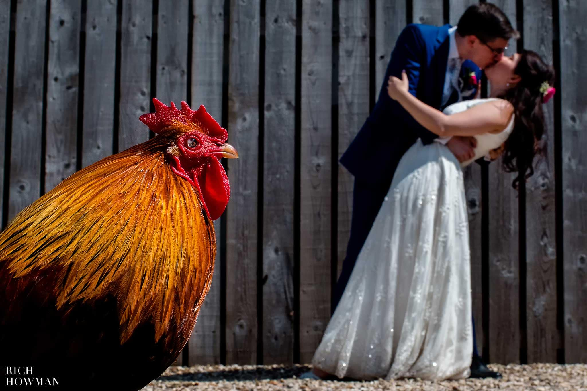 Farm Wedding photography in Gloucestershire. A chicker is pictured with the bride and groom at their family farm wedding